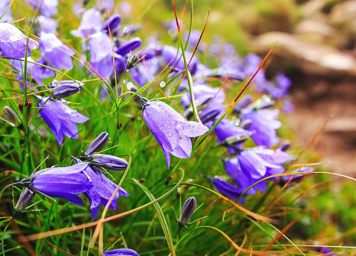 10 csodaszép évelő virág, amit ősz elején érdemes elültetni