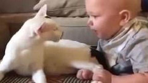 Együtt cukiskodott a baba és az örökbe fogadott cica – videó