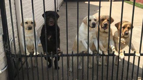 Itt a bizonyíték, hogy a kutyák és a postások nagyon is jó barátok