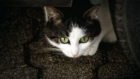 Ékszíj ejtette fogságba a motortérben utazó cicát – fotók