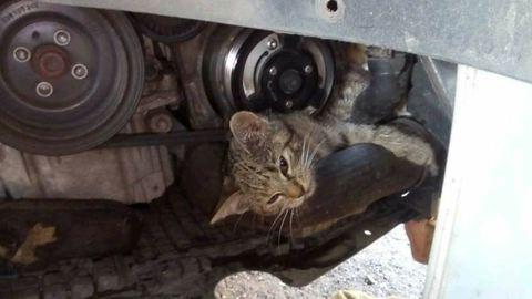 Autóba szorult kiscicát mentettek Zuglóban