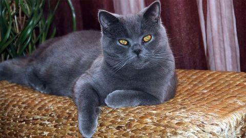 Sok pénzt ér, ha tudod, hol kószál ez a macska – fotó