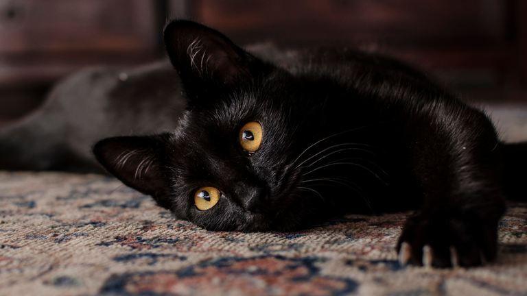 Ma van a fekete macskák világnapja