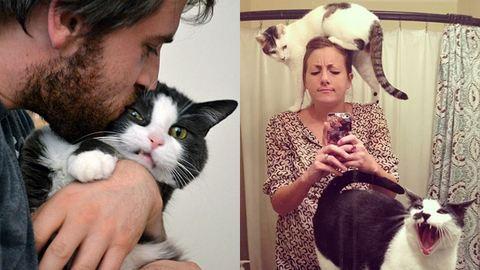 Macskák, amik gyűlölnek szelfizni