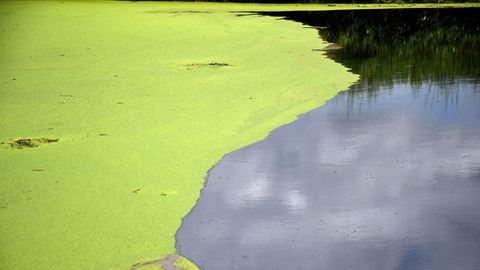 Ha nincsenek az algák, emberek sem lennének