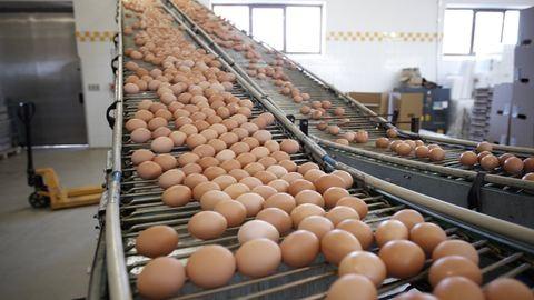Magyar tojásban is kimutatták a rovarirtószert
