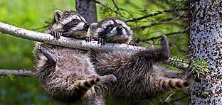 2008: az újdonságok éve az Állatkertben