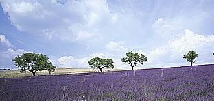Mesebeli úti célok: Levendulaút Provence-ban