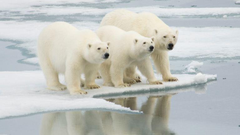 Mi történik a Földdel, ha az összes jégtakaró elolvad?