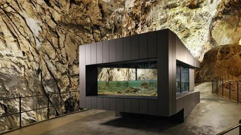 Sárkányokat nevelnek egy szlovén barlangban