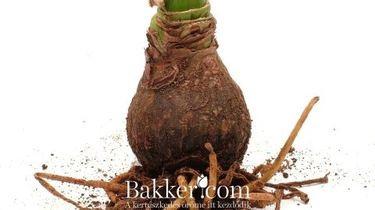 Nyereményjáték Bakker.com