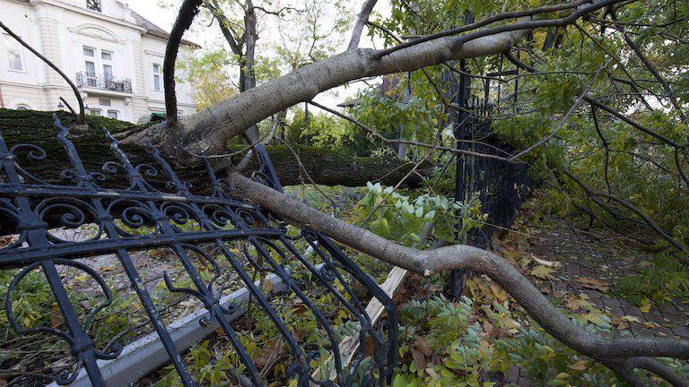 Kidőlt fa Siófokon (MTI Fotó: Varga György)