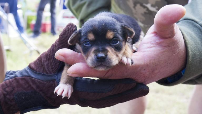 kutyatelep, söjtör (MTI Fotó: Varga György)