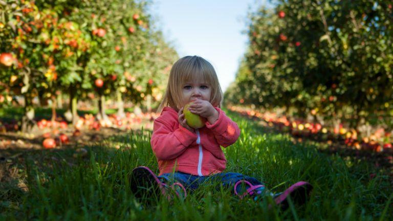 almát evő gyerek