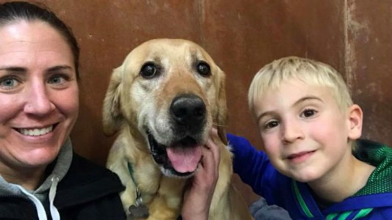 kutya, otthon, önkéntes
