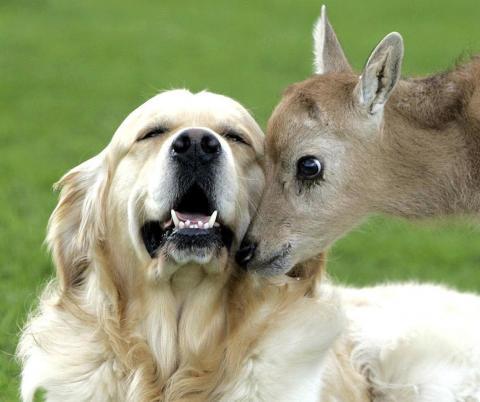 Kattins a képre az állatbarát állatokért!
