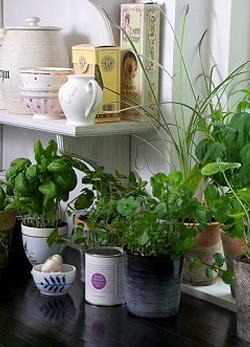Így tartsd életben a fűszernövényeidet!