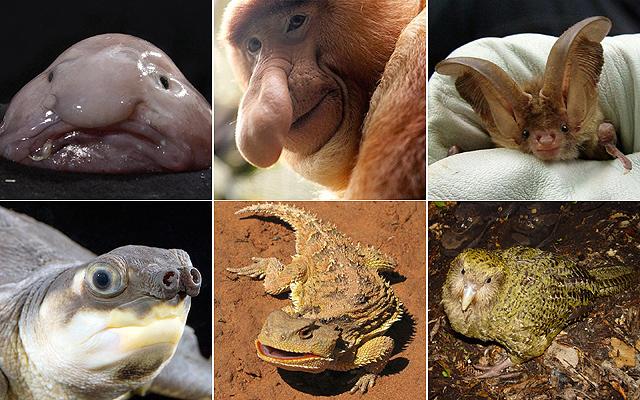 A világ legcsúnyább állatát keresik