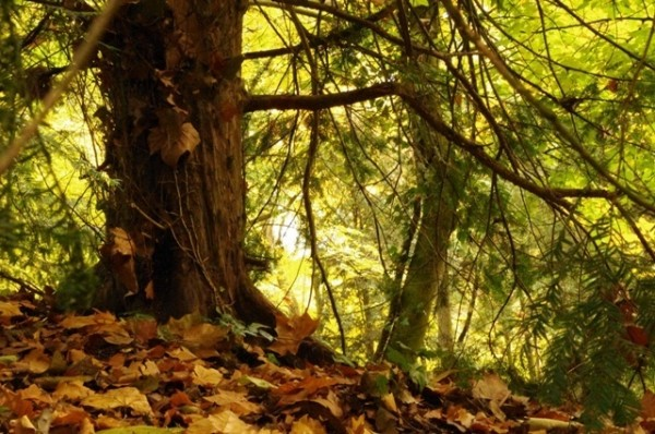 Csodálatos őszi képek
