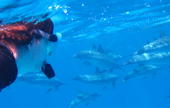 forrás: bluedolphin.hu