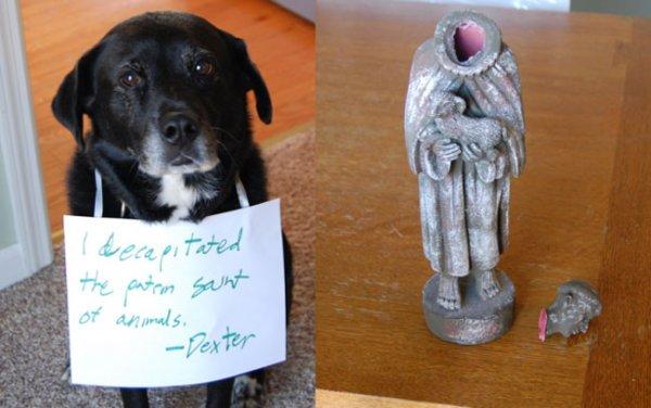 Tündéri képek bűnbánó kutyákról