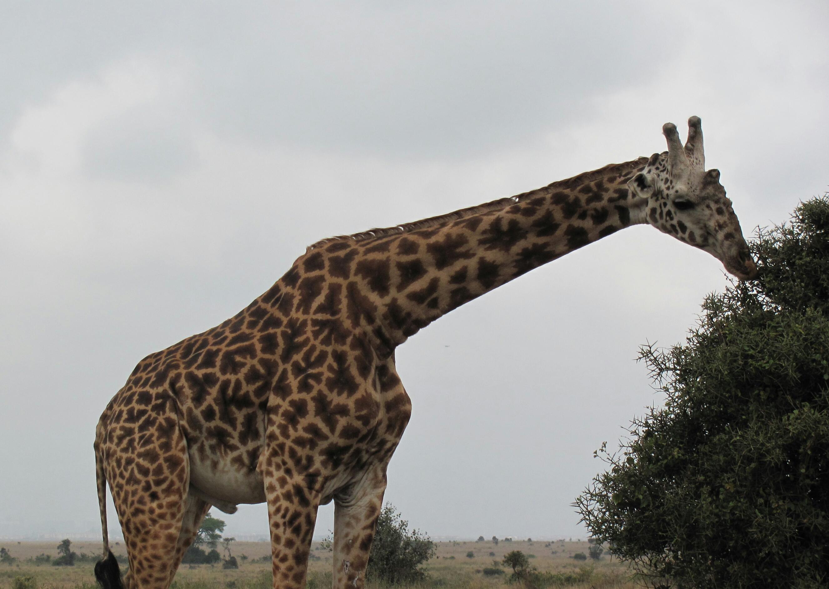 Kenya 2.