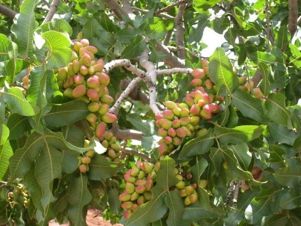 egzotikus fűszerek és gyümölcsök