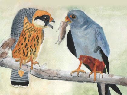 Ünneplőbe öltözött madaraink - pályázat