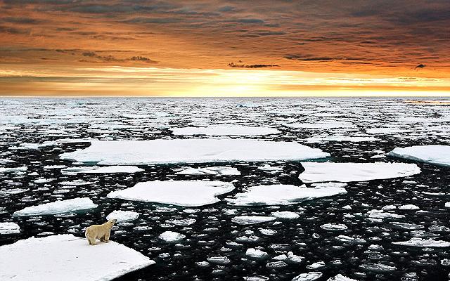 Elgondolkodtató fotó: jégtáblán sodródik a jegesmedve