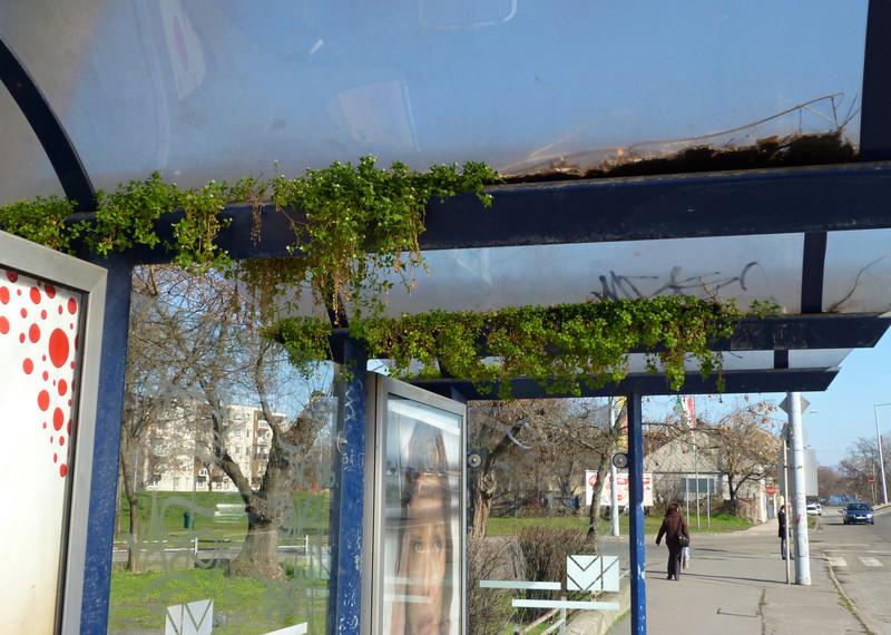 Zöldbe borult buszmegálló