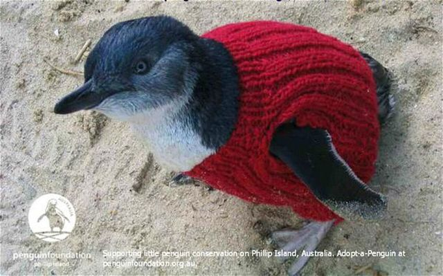 Forrás: The Penguin Foundation