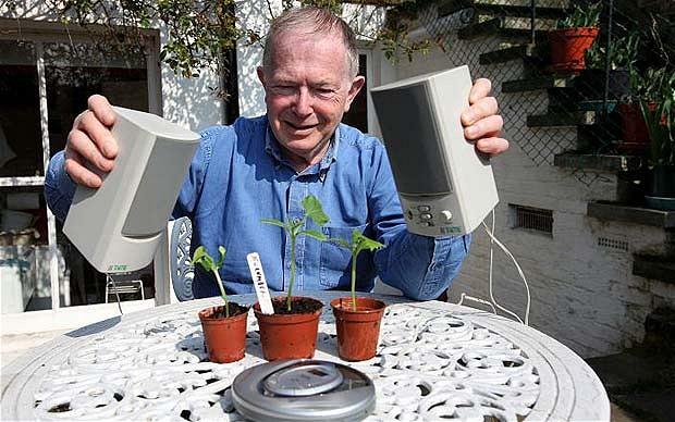 Beszélj a növényedhez - lehet, hogy válaszol