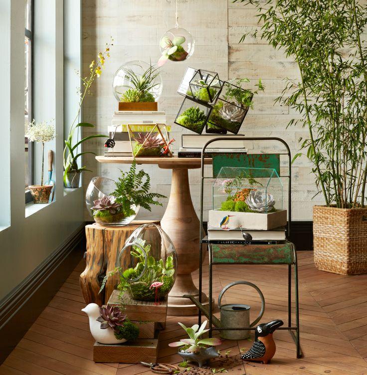 Növényhoroszkóp