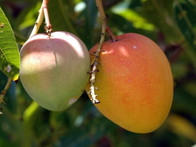 Lépj túl a határokon - nevelj egzotikus gyümölcsöket