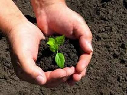 Hogyan ültess gyógynövény palántákat?