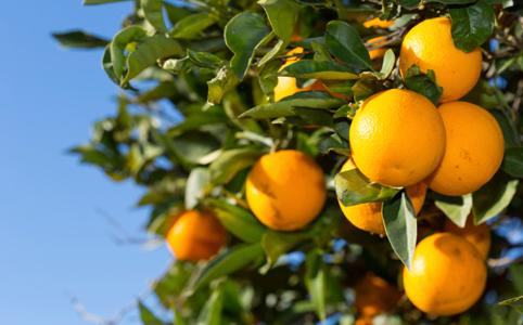 A csodálatos C-vitamin