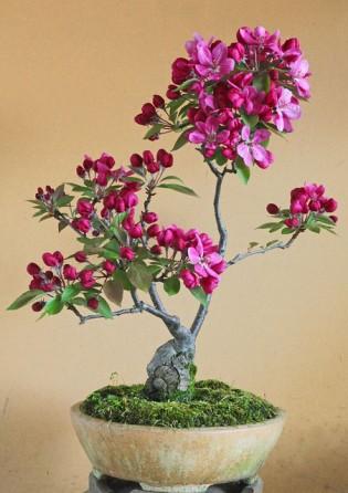 Spirituális kertészet a panelban - te is lehetsz bonsai művész