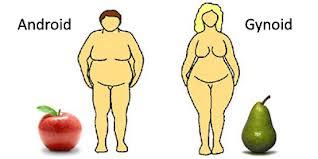 Nőies és férfias elhízás