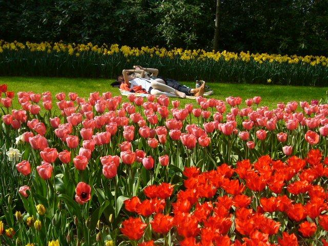Tulipánország