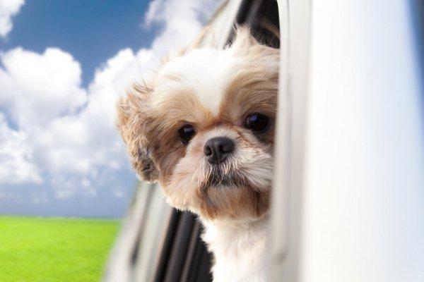 Így utazz kutyával autóban!