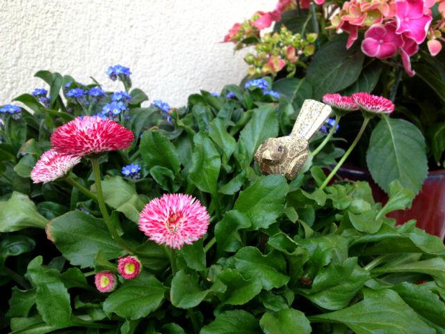 Tavaszt az erkélyre: ültess nefelejcset százszorszéppel!