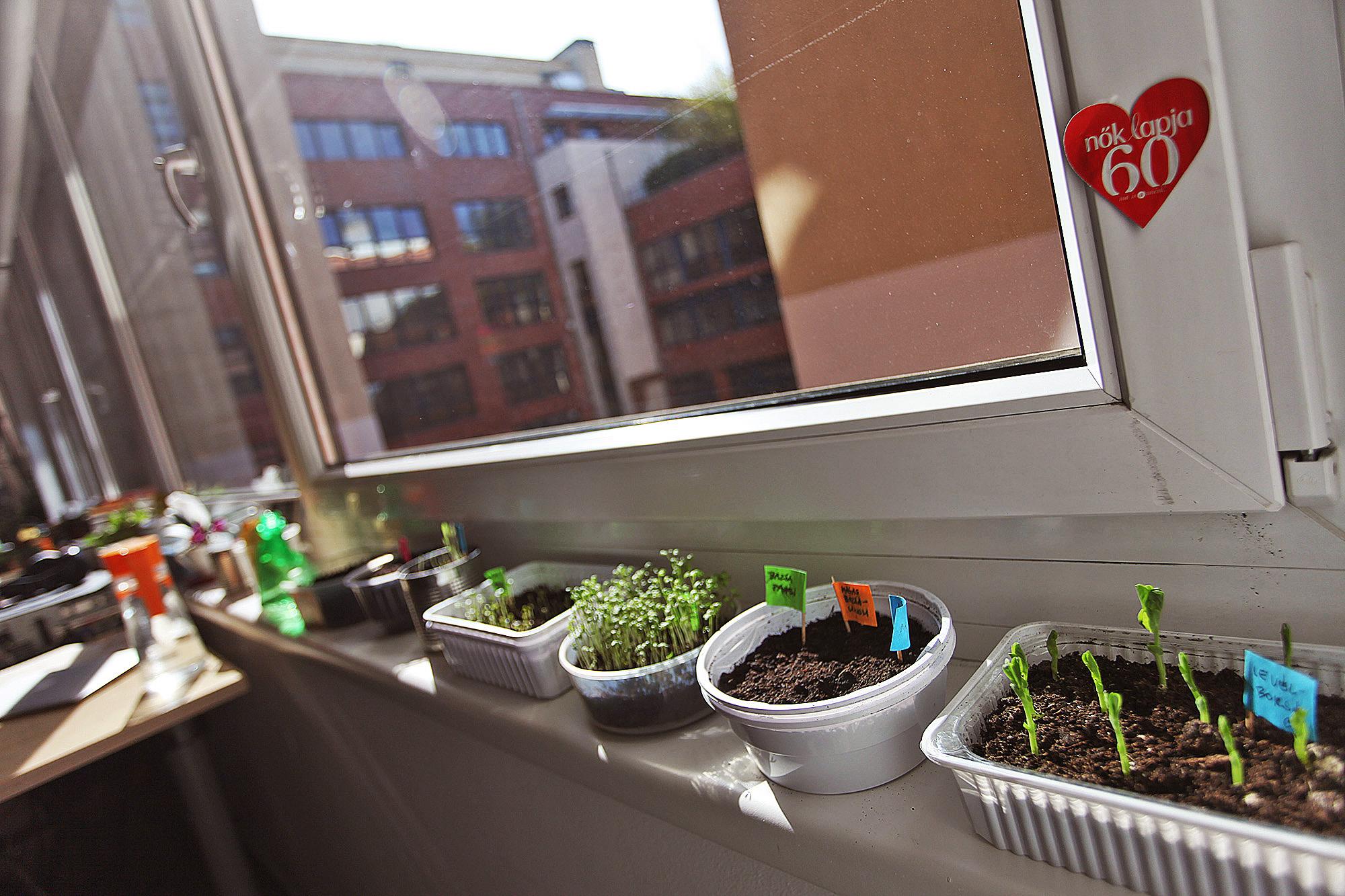 Fillérekből ültettünk menő kertet az iroda ablakába