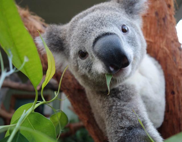 (MTI/EPA/Wild Life Sydney Zoo)