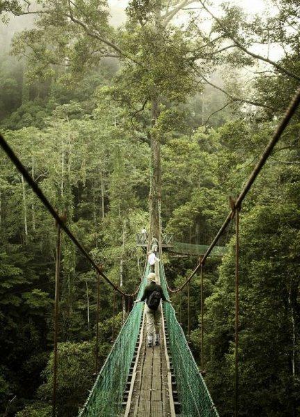 Lélegzetelállító séta a lombok között