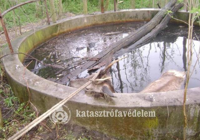 Forrás: kapos.hu