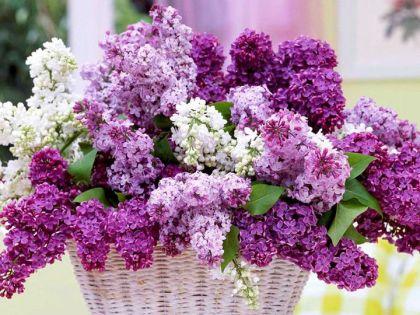 Így válassz virágot anyák napjára