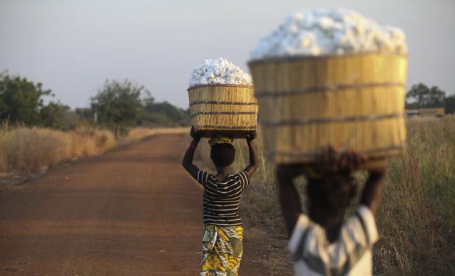 Burkina Faso, az egyik legszegényebb ország a világon, melynek legfőbb export áruja a gyapot (Foto: Bloomberg)
