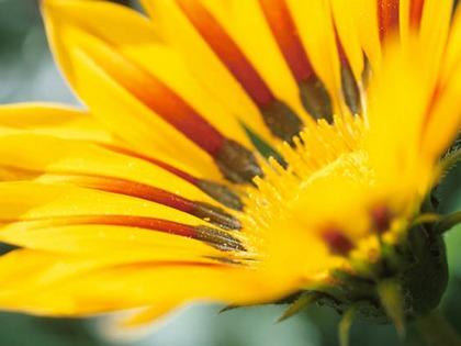 Virágporral az egészséges életért