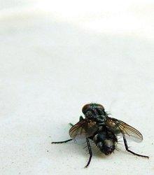 Űzzük el a rovarokat!