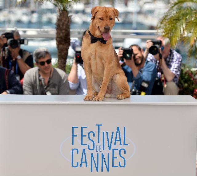Sztár lett a magyar kutya Cannes-ban